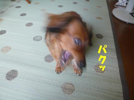 201006275.JPG