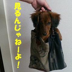 袋入りチョコ1.JPG